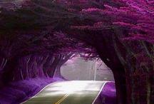 amazing nature  / by Cindi Audelo