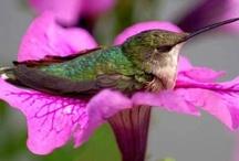 butterflies & hummingbirds  / by Cindi Audelo