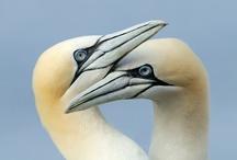 Birds Group Board / Beautiful Colorful Wild Bird Photography Pinterest Group Board.