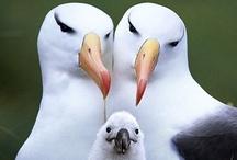 fabulous birds / by Cindi Audelo