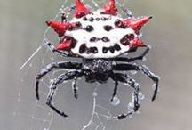 SPIDEYS / I like spiders. I find them fascinating and some of them are even beautiful. Just don't let one geT ON ME! / by Skye Dupre