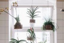 Gardening ∆ / Pflanzen und grünliches für drinnen und draußen