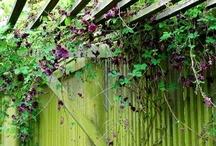 Garden & plants / by Selina Moore