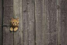 Animals / by Hiroko Chiba