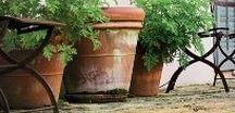 gArden / pOts / 'Sous le chapeau du jardinier se cache toujours sagesse et vérité'