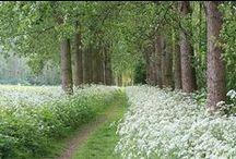 """gArden / flOwers aNne's LaCe / """" Il y a des fleurs partout pour qui veut bien les voir """""""