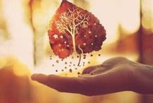 aUtumn / Rouge, les feuilles de l'érable. Orange les champignons des bois. Jaune le soleil qui se voile. Marron, comme le tronc. Belles sont les couleurs de l'automne !