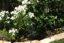 Mein Garten / Mein Garten, ein Ort für Mensch und Tier.  #garten #natur #garden #hage #tiere #bienen #pflanzen #blumen #biotop