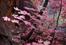 sWeet color / purple / pink and...