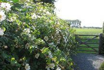my gArden / ReGina / Welcome to my home  and garden
