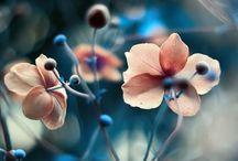 Cl@u || Flowers / Flowers