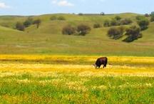 Ranching Matters