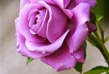 Glorious Roses / Vibrant colors / by Dreama Wolfingbarger