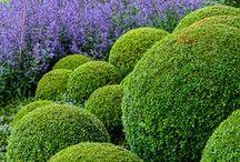 ogród doskonały