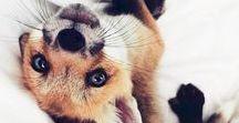 \Animal\
