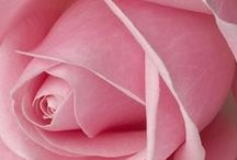 PINK / Pleasing shades of pink