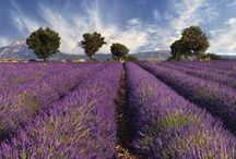 Provence / Learn more about our self-guided cycling, hiking and multisport trips in stunning, sunny lavender-filled Provence:  http://www.discoverfrance.com/where-we-go.php