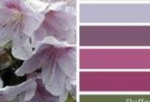 Colour / Colour palettes for inspiration and reference