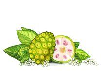 KORA Organics Key Ingredients