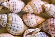 ♒ She sells sea shells... / Natural rhythm and harmony