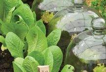 ❁ Green Thumb ❁ / Gardening on a back plot