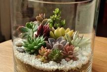 ❁ Green Thumb ❁ SUCCULENTS AND CACTI / Plants surprising in many ways.