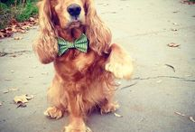 Dogs look awesome with bow ties! / Funky dog bow ties, fit both girls and boys. Each ranging from 7$. 30% of the sales are donated to dog shelters. Help us help and look great. www.funkydogbowties.com