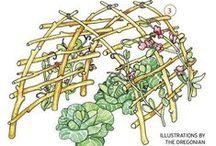 ✣ Deʟɪɢʜᴛғᴜʟ DIY ₪ / Garden DIY. See also  'DIY Garden Structures' and 'Horticulture hints' / by ✿⊱ ᎷᎯᏒᎥᏖᏕᎯ'Ꮥ ᎶᎯᏒᎠᎬN ⊰✿