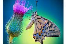 ~ Butterflies ~ / by Teresa Branscum
