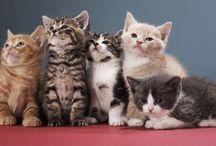 Cute creatures