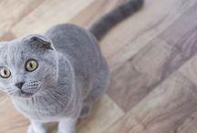 Katzenpension-Unbehaun / Unsere Gäste