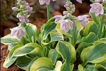 Uncommon Plants