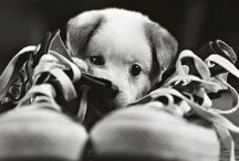 puppies my favorite!
