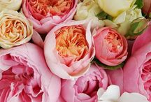 Flowers / Flowers, flower arranging