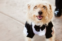 It's a Dog's Life / Dogs as ring bearers. What could be better?