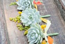 Succulents and Such! / Succulents are HOT in the Wedding World and FiftyFlowers has a great selection of wholesale succulents, perfect for your event!