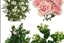 DIY Wedding Flower Combos / DIY Wedding Flowers combinations are designed for the DIY Bride. Popular, fresh cut wedding flowers are boxed together in correct quantities, perfect for making your own wedding flower arrangements, bridal bouquets, and other wedding flower pieces!