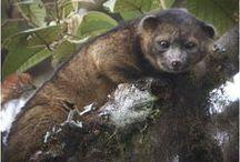 Biodiversity Discoveries