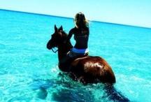 Horseback♥ / by MADELiNE FLAGG