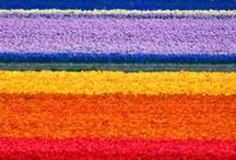 fargerike ting-color / farger