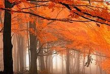 Autumn Leaves / Celebrating the beauty of Autumn