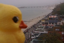 Duck the Traveler