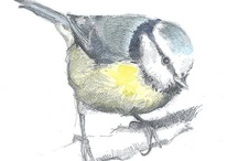 Bird Art & Illustration / art, illustration and photography, including some of my own work