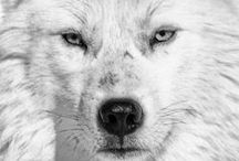 Wolves / by A