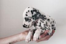 Doggy :3