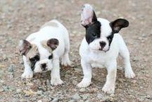 Pups & animals