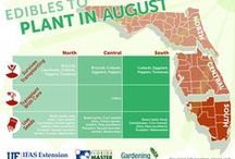 Fruits and Vegetables / From north to south Florida, learn what fruits and vegetables to plant in your garden throughout the year.