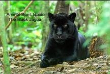 Spirit Animals / become one with nature,listen to the earths other creatures / by Tina Kendrick