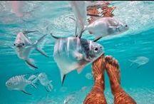 LIFE | Underwater