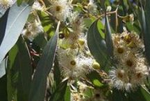 A | Australian Native Flora and Fauna / Research